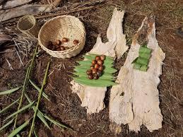 black bean aboriginal use of native plants emilie ens emilieens twitter
