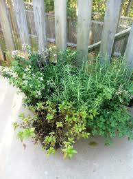 vegetable gardening tips here are my secret tips