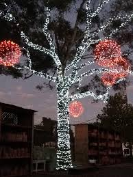 Christmas Light Balls For Trees 118 Best Christmas Light Display Images On Pinterest Christmas