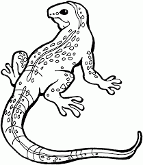 desert lizard coloring page lizards coloring pages free throughout lizard page plan 2