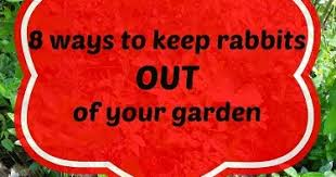 how to keep rabbits out of the garden home design inspiration