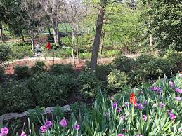 Botanical Gardens Dallas by Dallas Blooms At The Arboretum My Heart Lives Here