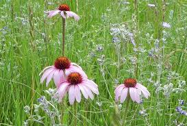 the flowers of summer at resources summer wildflowers