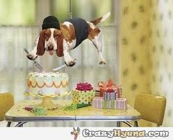 Birthday Cake Dog Meme - dog in stealth mode