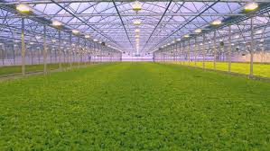 modern green house greenhouse free video clips 182 free downloads