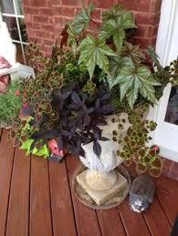 Front Door Planters by Front Door Planter On Porch Fern Coleus Begonia Ivy Vinca