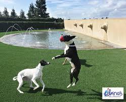 dog owners synlawn okanagan