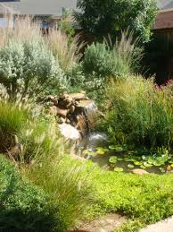 native pond plants backyard landscaping tropical garden house design with various