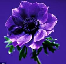 anemone plant make friends with anemone plant them now then sit back and enjoy