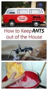 How To Keep House by Keep Ants Out Of The House With These Tips And Tricks