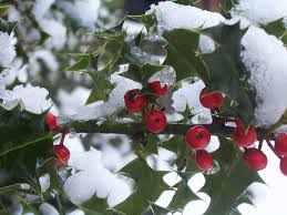 native plants missouri 5 native plants that add winter interest stl tree pros