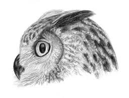 owl sketch finished by davidrak on deviantart