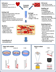 physiological aspects of cardiac tissue engineering heart and