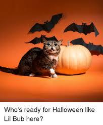 Lil Bub Meme - who s ready for halloween like lil bub here halloween meme on me me