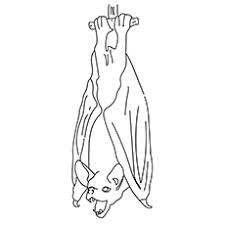20 free printable bats coloring pages