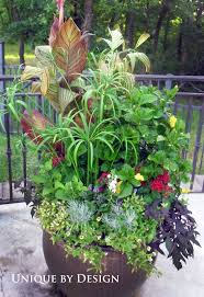 22 best patio garden ideas images on pinterest pots plants and
