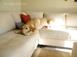 Dog Blankets For Sofa by Thrifty And Chic Diy Projects And Home Decor
