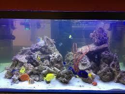 led reef aquarium lighting zetlight lancia marine reef aquarium fish tank programmable