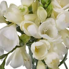 freesia flower freesia flower