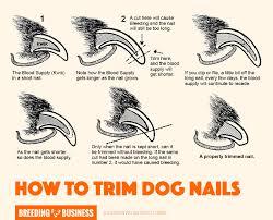 top 5 best dog nail clippers u2013 pliers scissors grinders