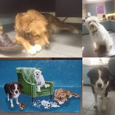 the heck crew bode ster howie and case dog the tan dog casey is such a happy dog and when he isn t wagging his tail he is known for curling up and