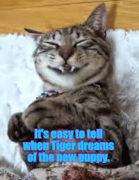 Mere Cat Meme - c mere lil woofy lolcats lol cat memes funny cats funny