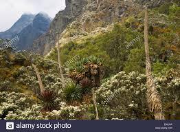 Washington vegetaion images Alpine vegetation stock photos alpine vegetation stock images jpg