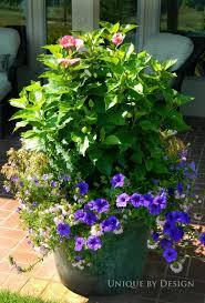 11 best tash u0027s garden images on pinterest flowers garden garden