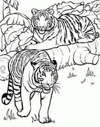tiger coloring pages cartoon tigers coloring pages cartoons