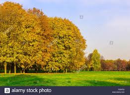 branchy multicolored trees on field with green grass at day