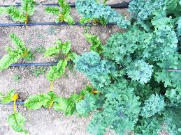 Gardening Tips For Summer - ascend cycle u2014 gardening tips and tricks for summer