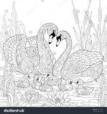 coloring book page swan birds family stock vector 662127091