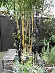 bamboo landscape photographs