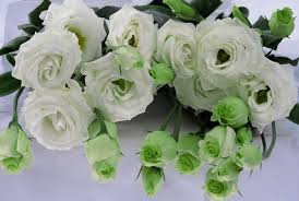 lisianthus flower mariachi white lisianthus flowers and fillers flowers by