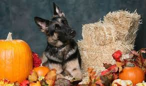don t forget your pet friendly thanksgiving shopping list
