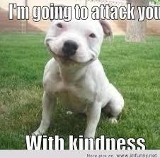 Meme Animals - animals meme pittbull