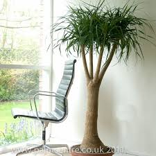 Indoor Tropical Plants For Sale - indoor plants and houseplants for sale from palm centre