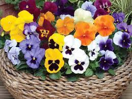 la u0027s best nurseries for spring gardening cbs los angeles