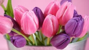 fiori viola fiori viola nomi significato fiori nomi dei fiori viola all