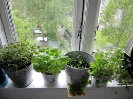 window herb garden planter designs ideas