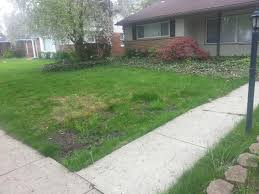 weed control how do i fix the worst lawn on the street