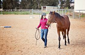 bachelor of equine science with specialisation future students