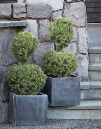 native alberta plants dwarf alberta spruce monrovia dwarf alberta spruce