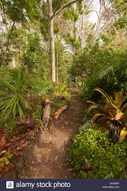 queensland native plants pathway through trees and shrubs in sub tropical bushland garden