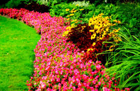 attractive flower lawn and garden show events qcca expo center
