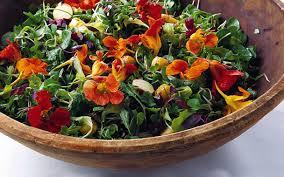 nasturtium flowers nasturtium uses benefits recipes cultivator