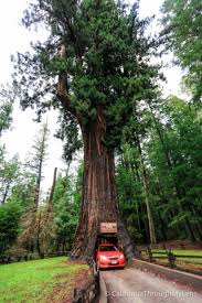 Chandelier Drive Through Tree Chandelier Drive Thru Tree In Leggett California Through My Lens