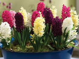 fragrant indoor winter garden cy fair lifestyles u0026 homes