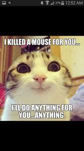 Crazy Ex Meme - jenn knees on twitter crazy ex girlfriend meme woman has a cat