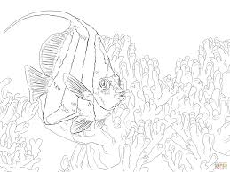 pennant coralfish coloring page new coloring page glum me